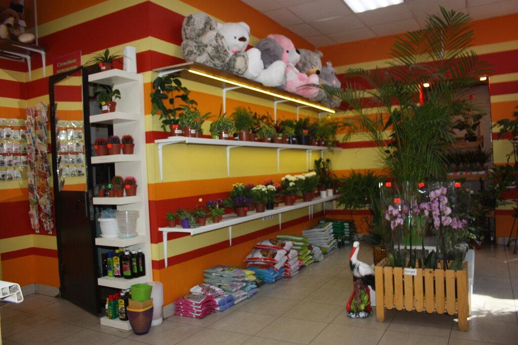 Магазин цветов в тюмень планета, цены