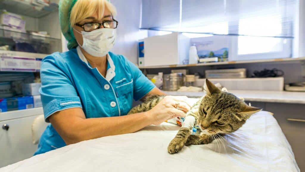 ветеринарная клиника — Лидаветсервис — Лида, фото №2
