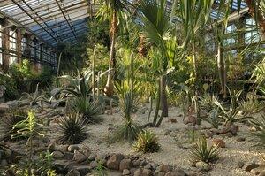 «Фондовая оранжерея Главного ботанического сада имени Н.В. Цицина» фото 1