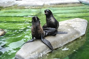 «Московский зоопарк» фото 1
