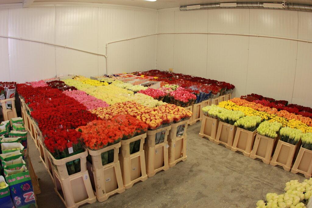 Цветы оптом новая голландия, доставка букеты кустовой