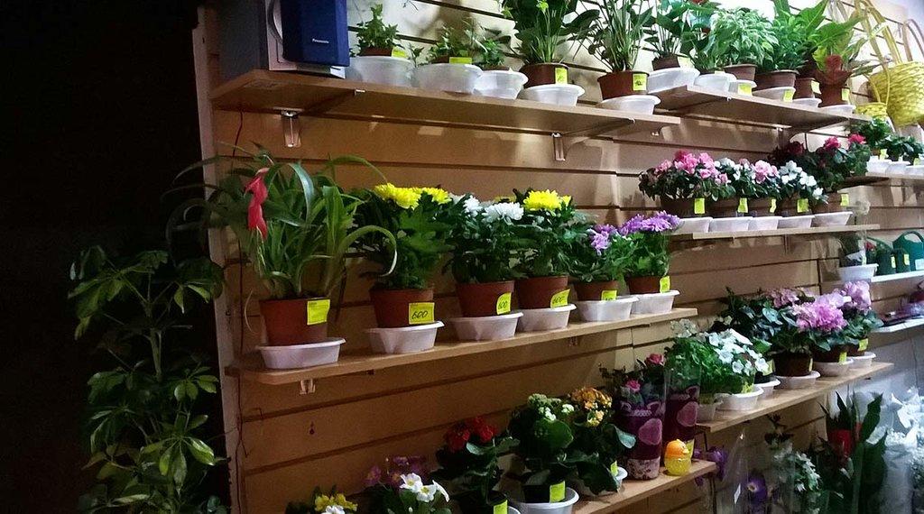 Роза, магазин цветов в мурманске сайт
