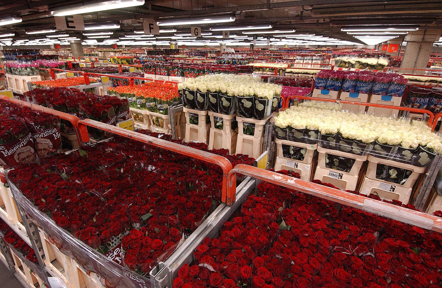 Роз оптовые в москве и московской области