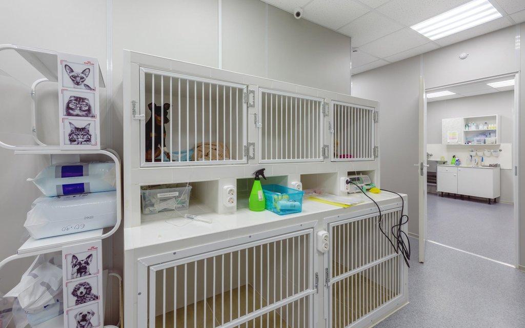 ветеринарная клиника — Dr. Pet's — Санкт-Петербург, фото №5