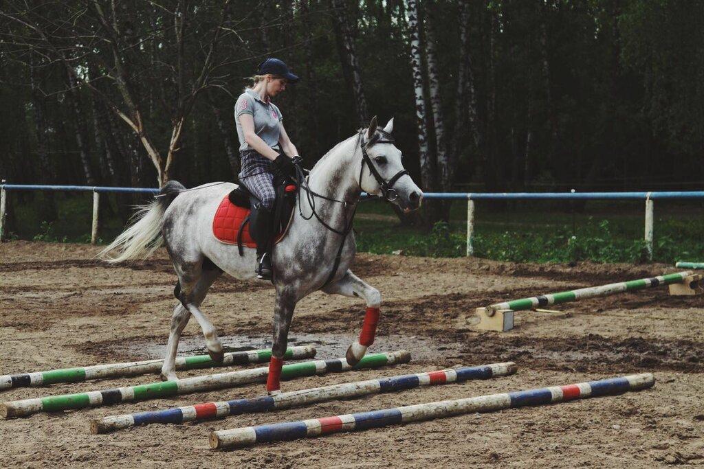 конный клуб династия москва