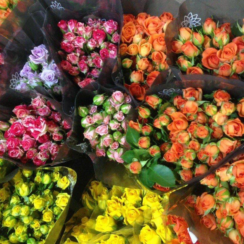 Цветы опт минская область, розы