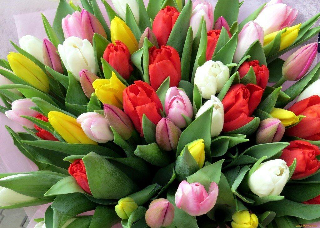 Цветы фото открытка