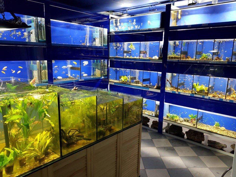 картинки аквариумного магазина навыков рисования