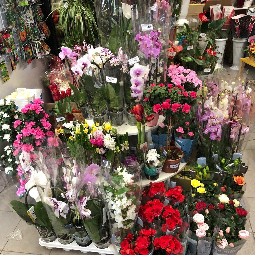 Купить цветы в домодедово ночью, оптовые