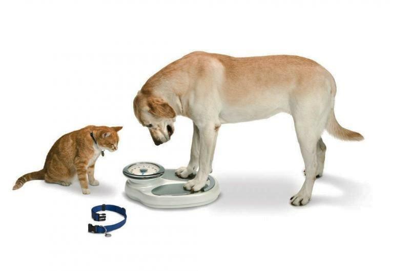 Для визитки, прикольные картинки собака и весы