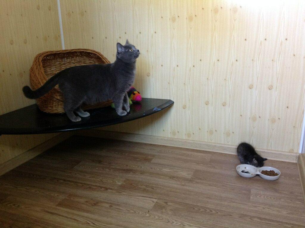 гостиница для животных — Зооостиница на Висиме — Пермь, фото №9