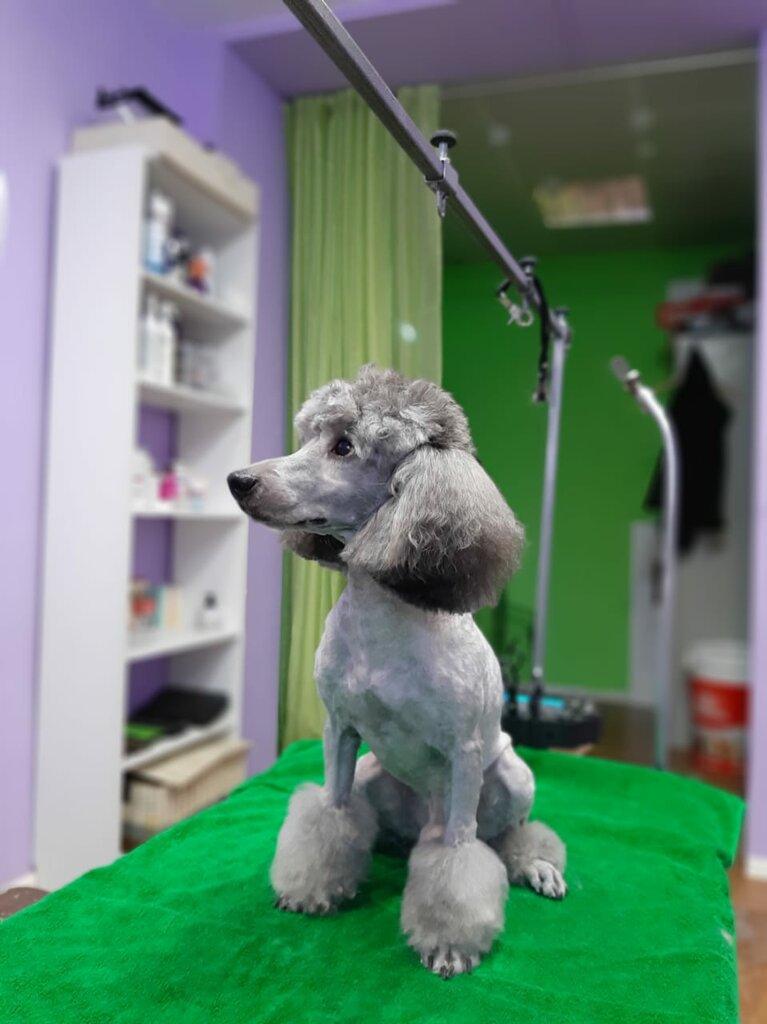 зоосалон, зоопарикмахерская — Purple Dog — Хабаровск, фото №5