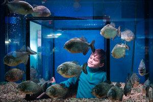 «Морской аквариум» фото 1