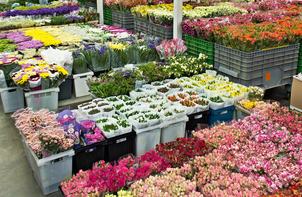 Фантазия цветы опт, томск доставка цветов