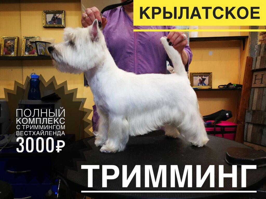 зоосалон, зоопарикмахерская — Пушистик — Москва, фото №1