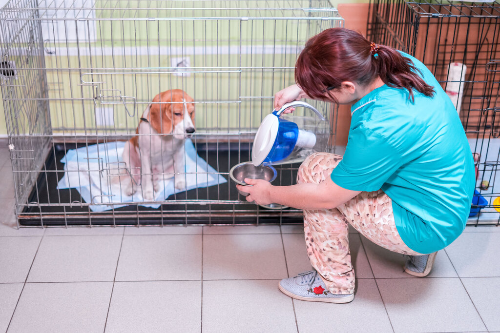 ветеринарная клиника — Био-Вет — Москва, фото №7