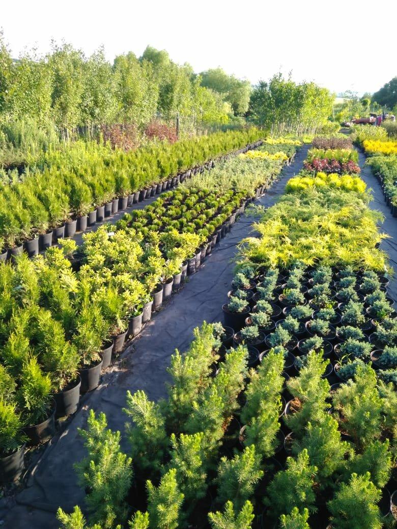 успеешь заскочить фото растений в питомнике татарникова среда для таких