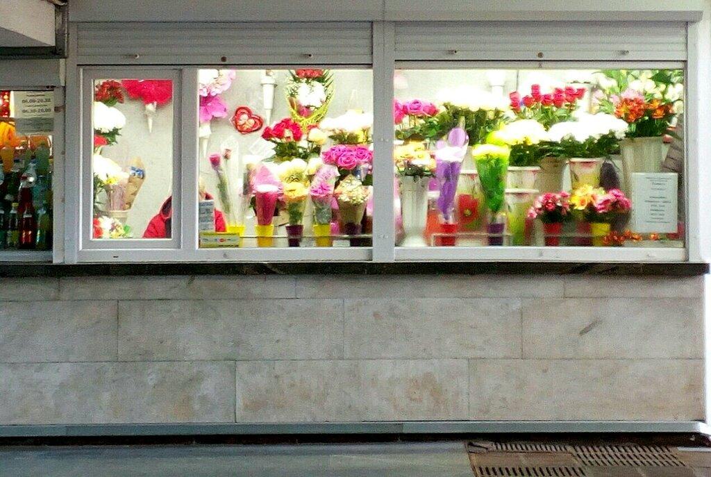 магазин цветов — Цветы — Минск, фото №1