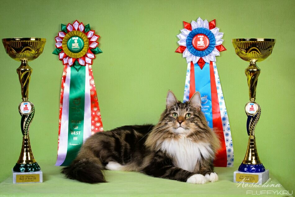 зоосалон, зоопарикмахерская — Puffcat — Москва, фото №1