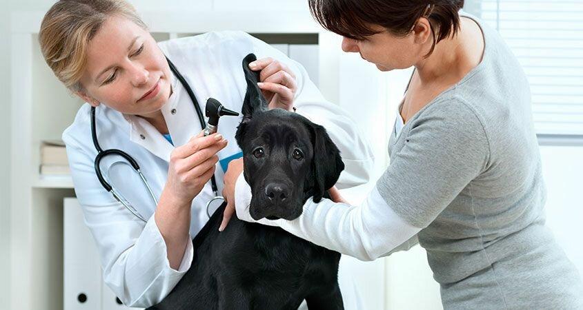 ветеринарная клиника — Ветеринарная клиника Зоомедик — Москва, фото №6