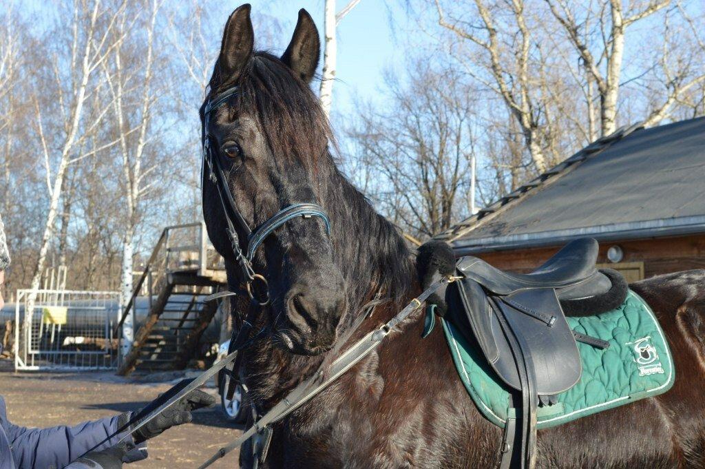 Казачий хутор москва конный клуб нижний клубы ночные