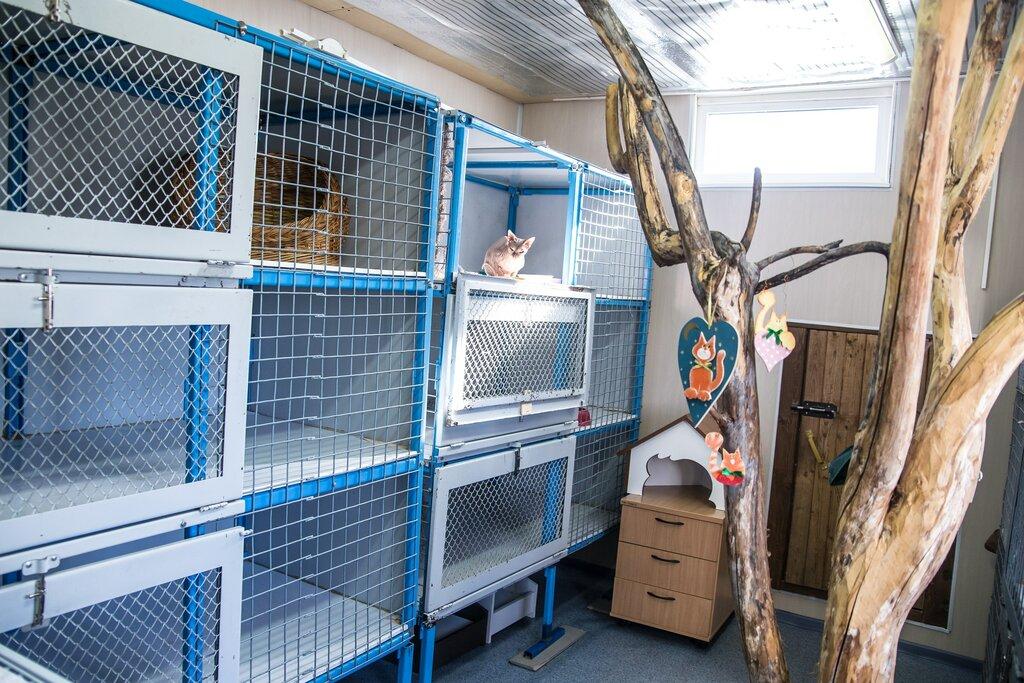 гостиница для животных — Зооостиница на Висиме — Пермь, фото №3