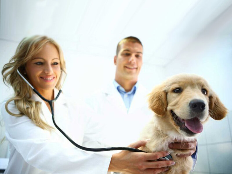 Бумаги, картинки для ветеринаров