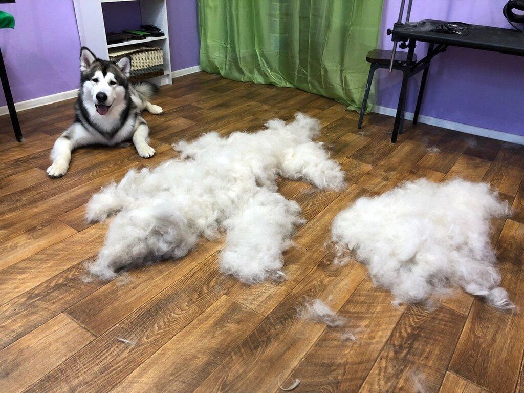 зоосалон, зоопарикмахерская — Purple Dog — Хабаровск, фото №3