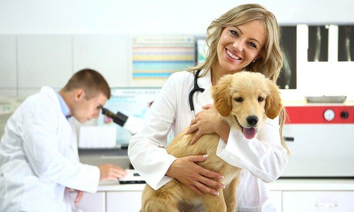 ветеринарная клиника — Ветеринарная клиника Зоомедик — Москва, фото №4