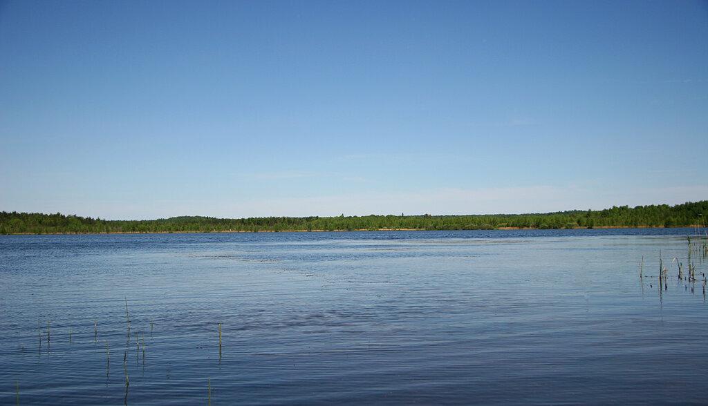 савельево ярославская область фото это, сути, легкая