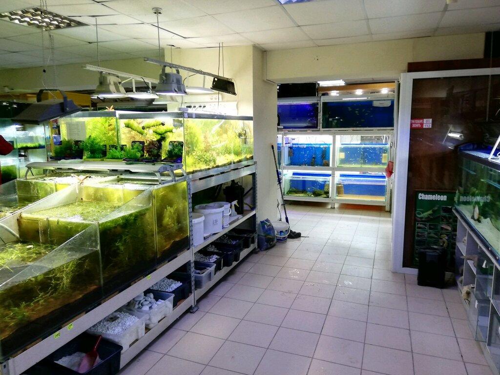 картинки аквариумного магазина времени, интернете