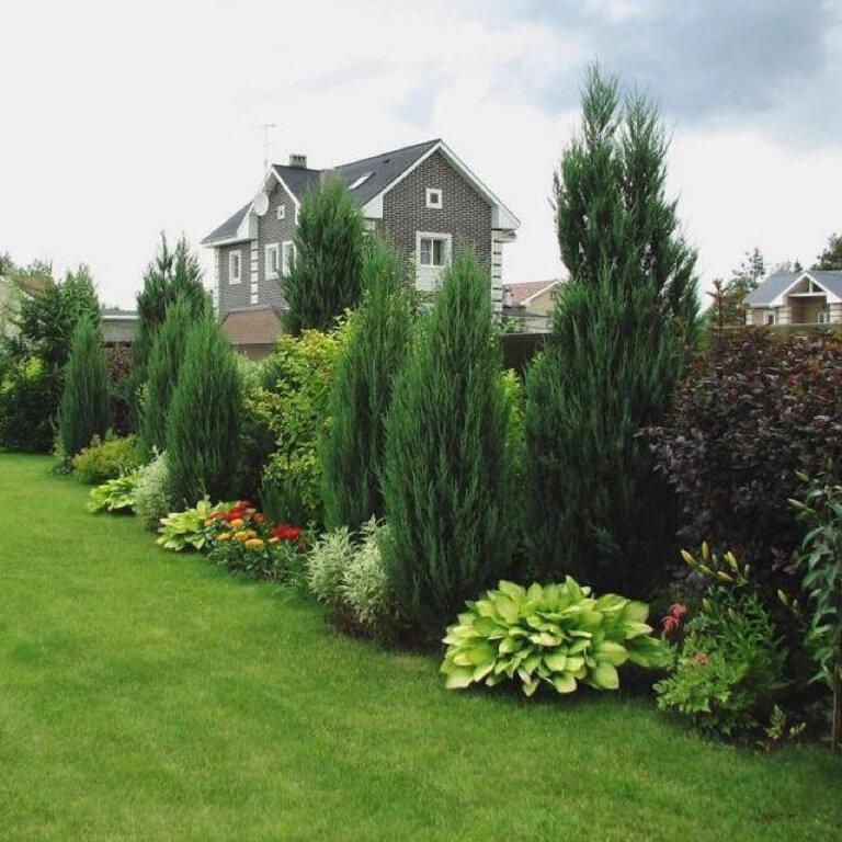 кто считает, как лучше посадить сад фото небольшая, серьёзная
