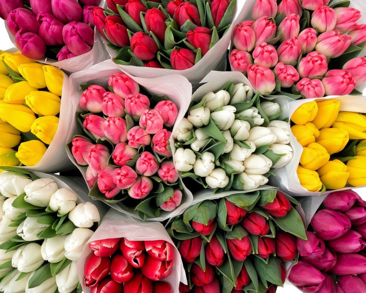 Для, тюльпаны оптом с доставкой по москве дешево