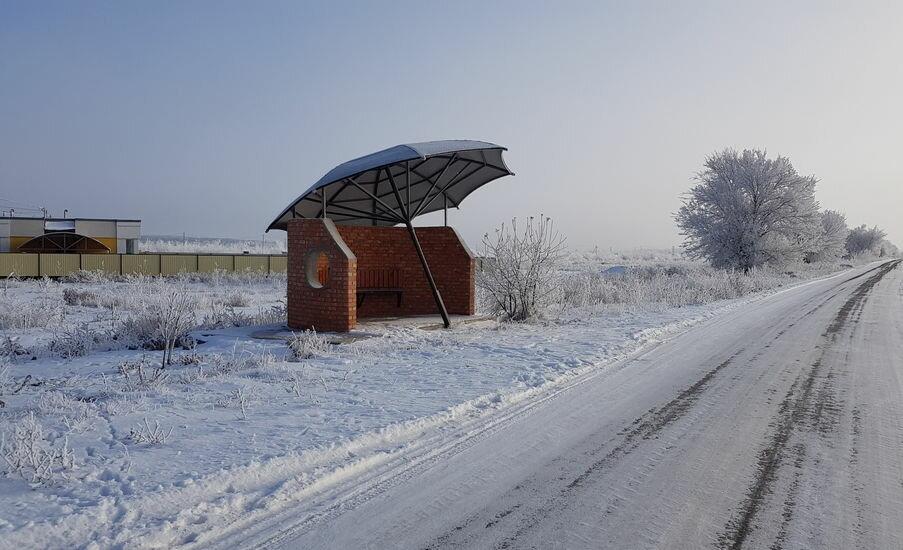 часто жуки поселок саратовской области фото и название без