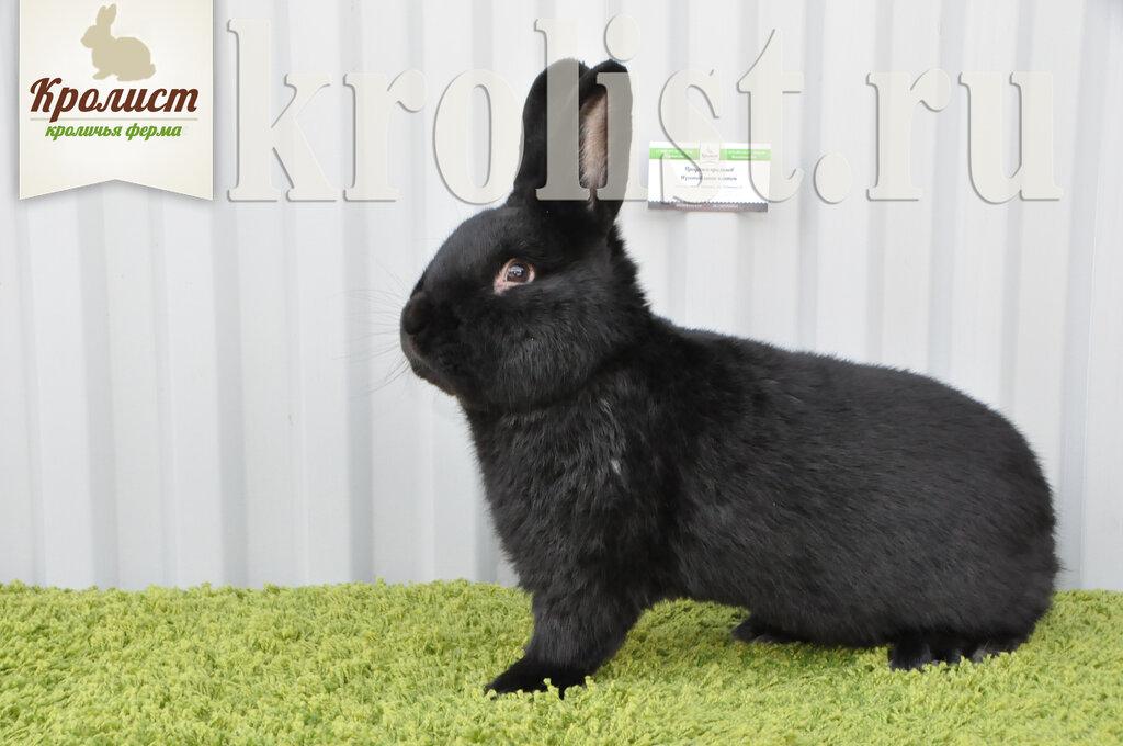 звероферма — Кролики Кролист — Кимовск, фото №1
