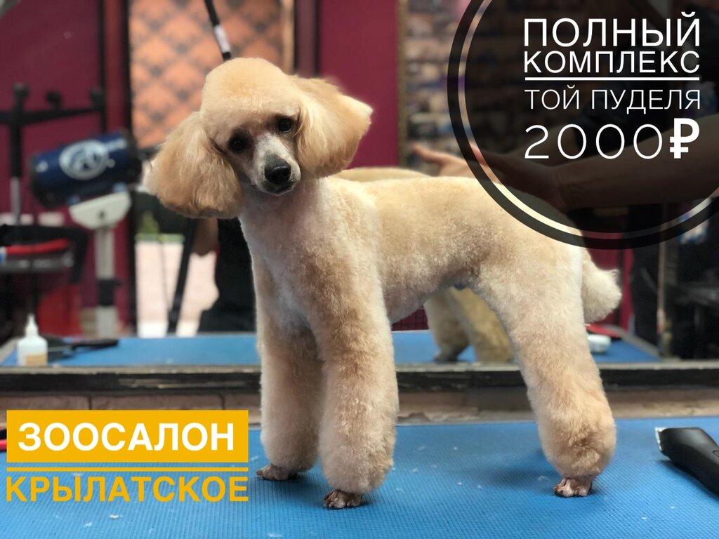 зоосалон, зоопарикмахерская — Пушистик — Москва, фото №8