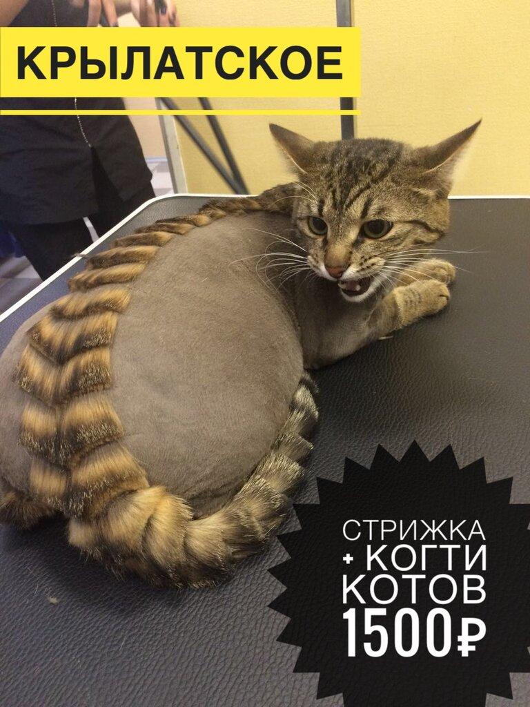 зоосалон, зоопарикмахерская — Пушистик — Москва, фото №9