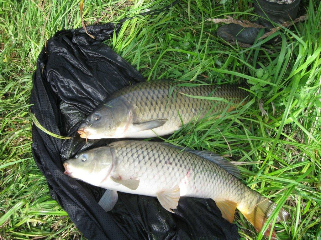 Рыбалка чистые пруды цены на