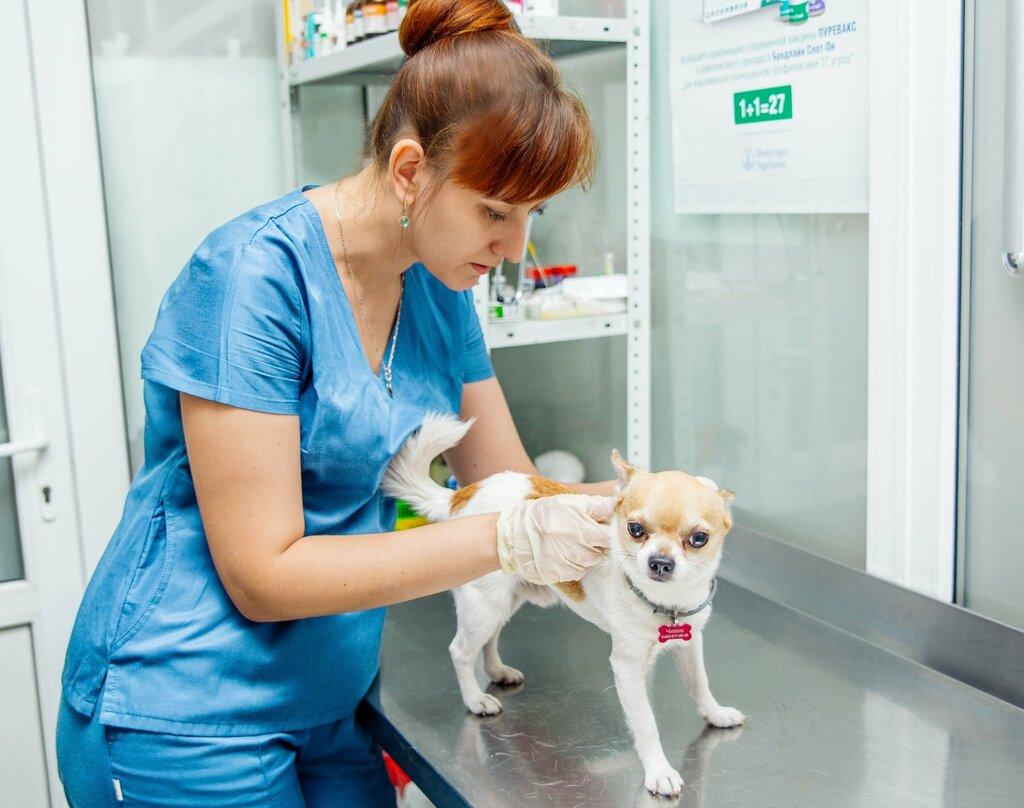 Картинка добрый ветеринар