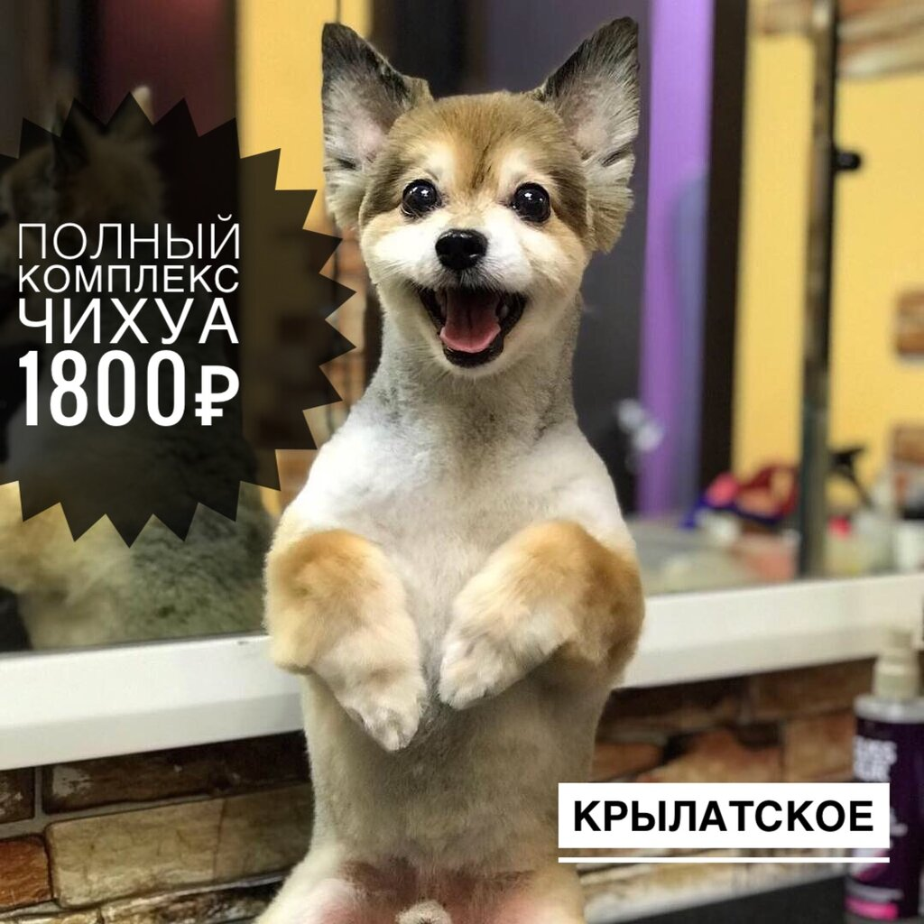 зоосалон, зоопарикмахерская — Пушистик — Москва, фото №7
