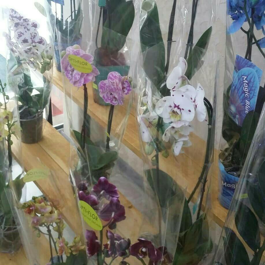 Где купить цветы в симферополе