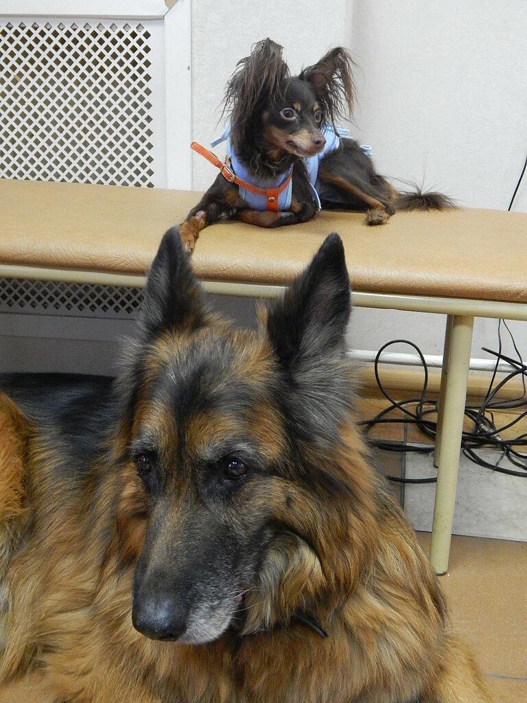 ветеринарная клиника — Веста — Санкт-Петербург, фото №6