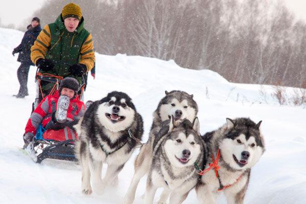 Катание на собачьих упряжках Иркутск, Байкал