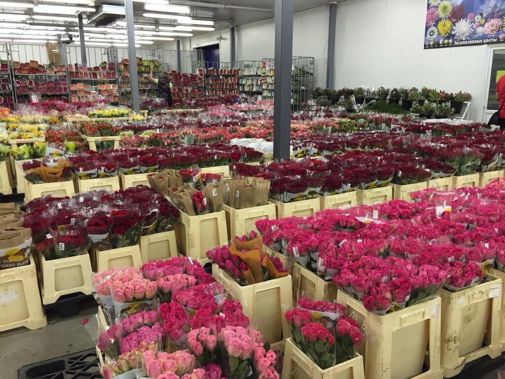Купить цветы, цветы оптовая база спб московское шоссе