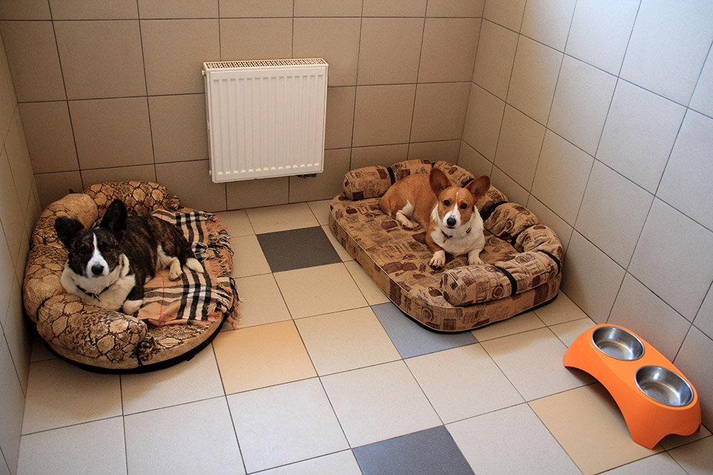 стоит картинки отель для собак красного
