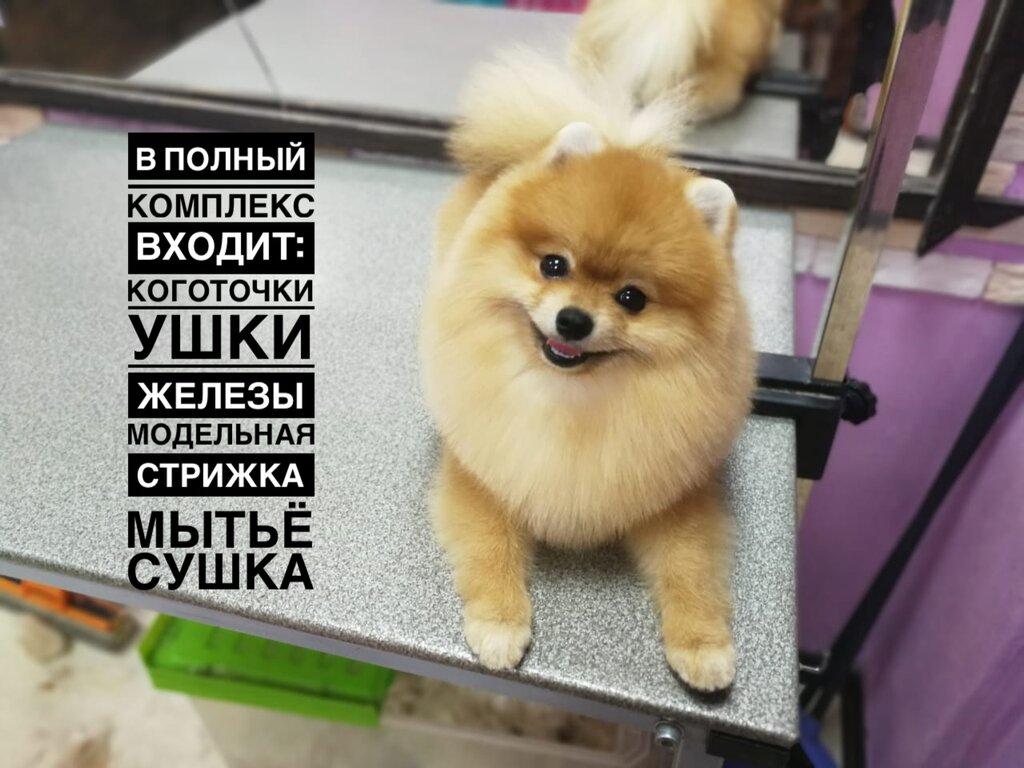 зоосалон, зоопарикмахерская — Пушистик — Москва, фото №2