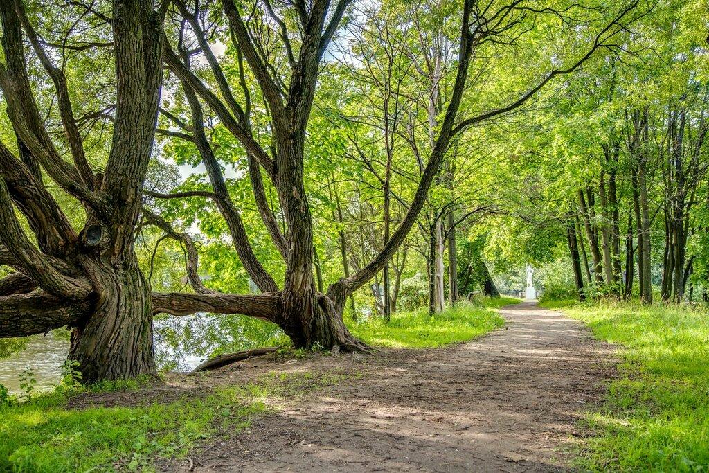 опоздали парк тихий отдых в санкт петербурге фото салтыкова