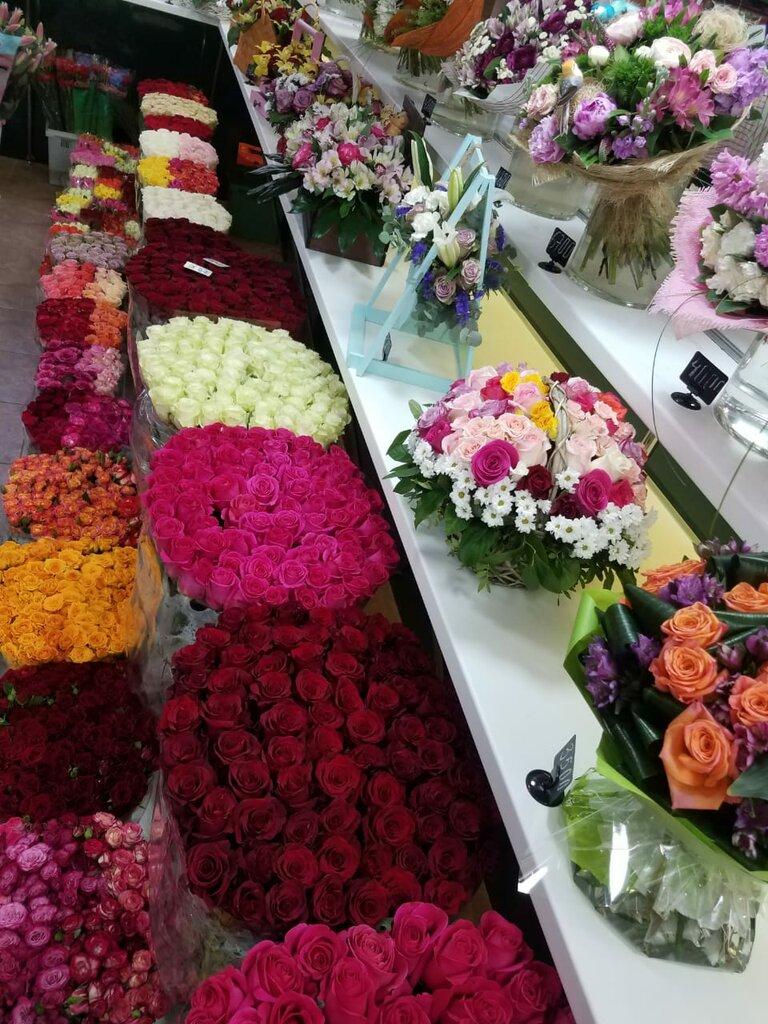 Оптовая база цветов донецк, стрелиции гортензии
