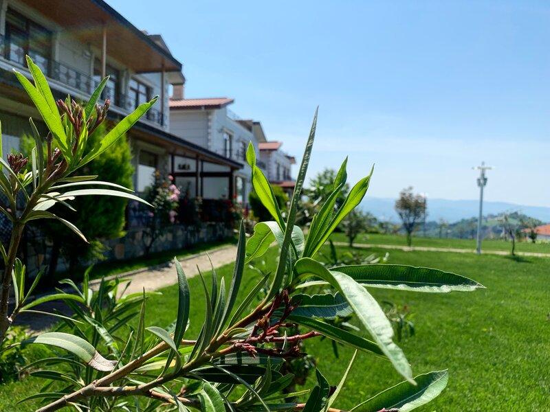 Mountain Forest Villa