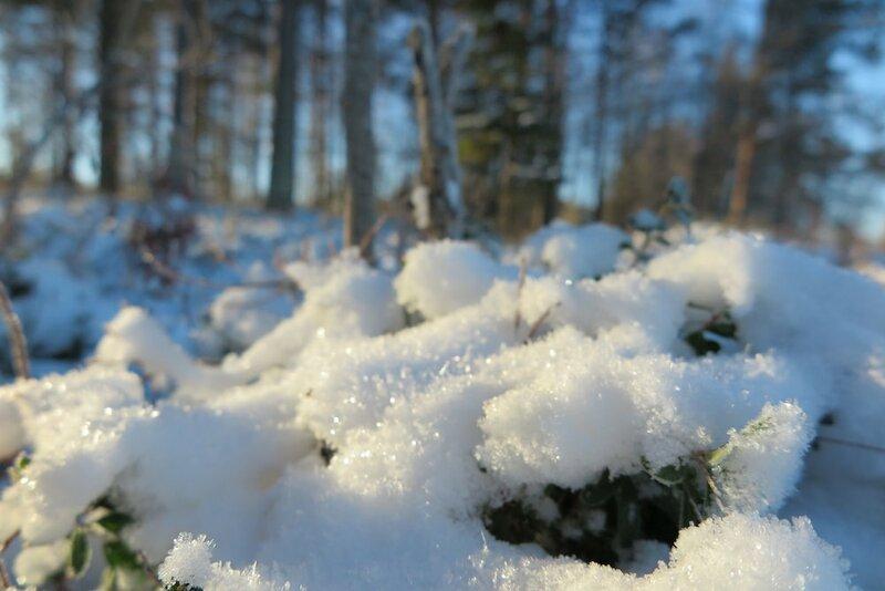 Lapland Getaway